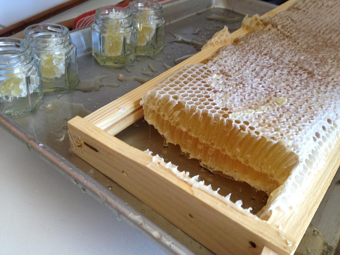 Katy Faix honey harvest